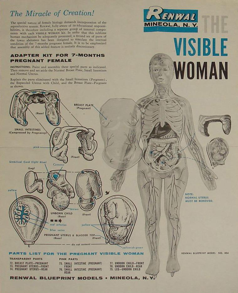 The Erotics of Anatomy | Nicholas S. Anderson